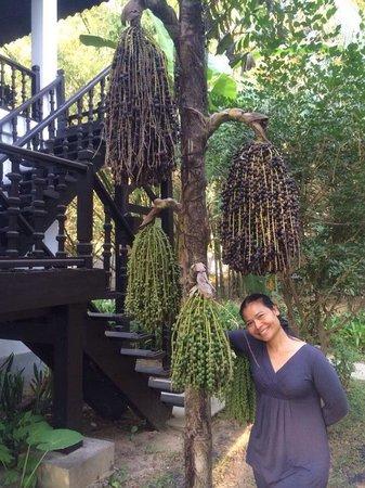 Thande Beach Hotel: Trees in manicured gardens.