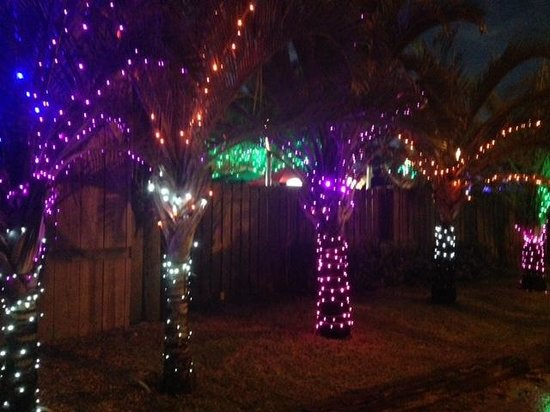 The Backyard : Nighttime is lit up