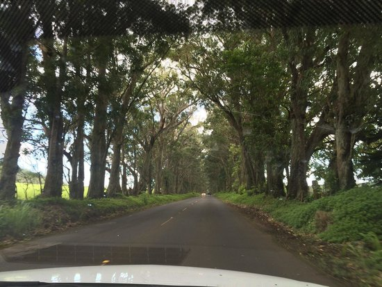 Kalaheo, HI: Tree Tunnel