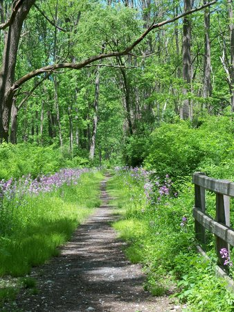 Montour Falls, NY: Catharine Valley Trail (near Millport trailhead)
