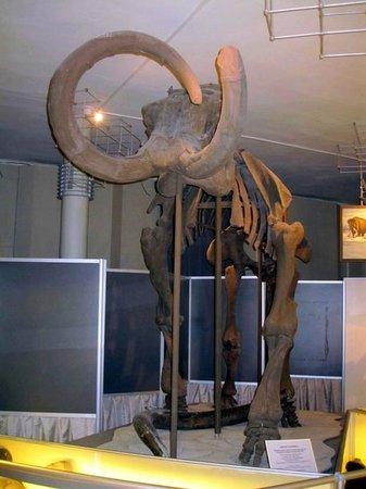 Nature Museum : мамонт!