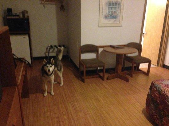 Wood floors feel much cleaner than carpet. Dog friendly is a big plus!