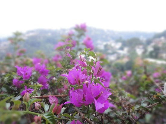 Blinkbonnie  Inn : Flower with Kandy City Background
