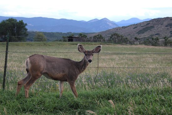The Cuchara Inn: Deer, turkey, bear, fish, elk, marmots, wildflowers, sunsets --we really got to experience CO