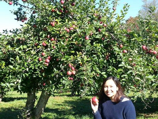 Maskar Orchards : Love the apples ar Masker Orchard.