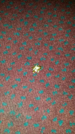 Ashlan Inn : Roach pic 3