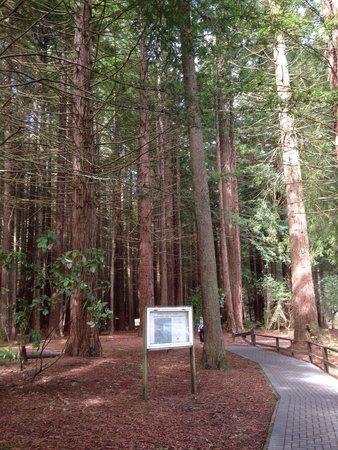 Redwoods, Whakarewarewa Forest: 遊歩道入口