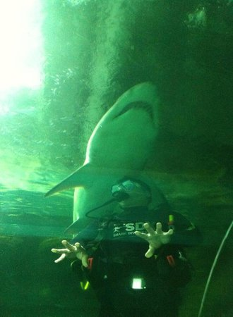 Manly Sea Life Sanctuary - Shark Dive Xtreme : Close encounter with HUGE shark!!