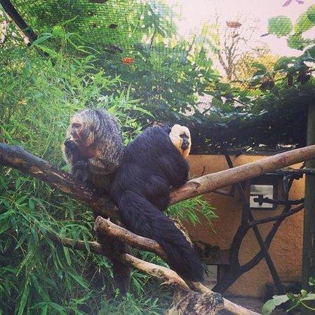 Parc Zoologique: les singes