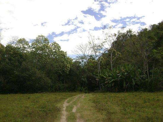 Curu National Wildlife Refuge: Jungle, Playa Quesera, Curu, Costa Rica
