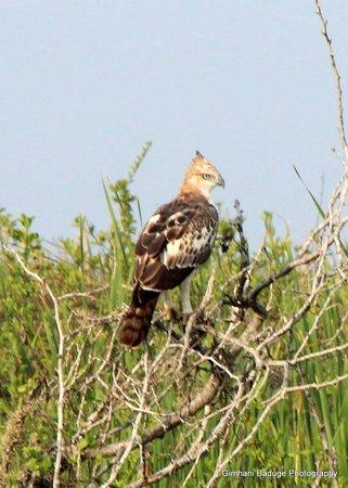 Bundala National Park : a paradise for birds....