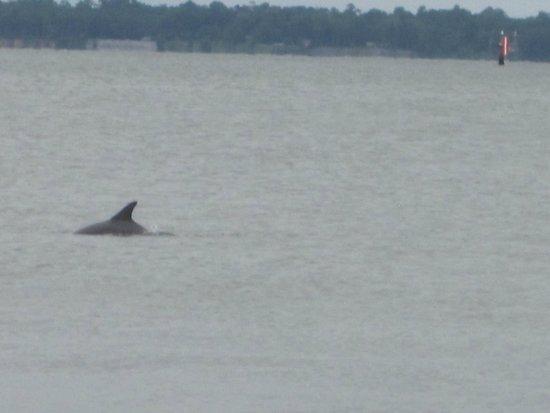 Charleston Harbor Resort & Marina : Enjoying dolphin show off pier