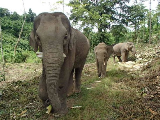 Boon Lott's Elephant Sanctuary : walk time