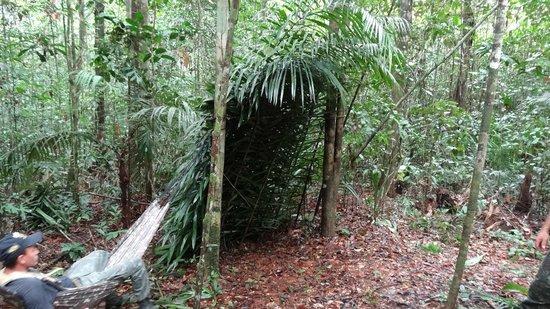 Resultado de imagem para Abrigo para Sobrevivência na Floresta