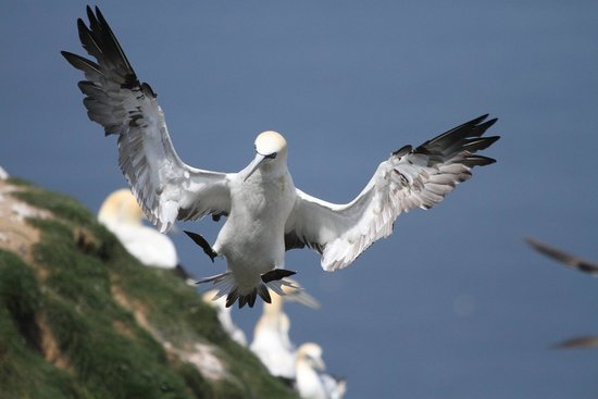 RSPB Bempton Cliffs: Put the brakes on