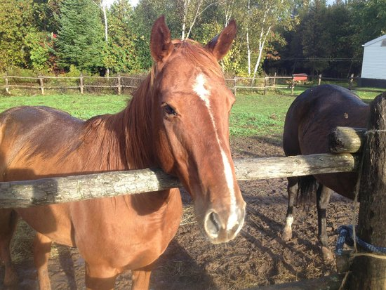 Wildwood Manor Ranch: one of the many horses