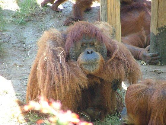 Safari Park: safari2