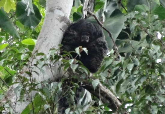 Siona Lodge: monk saki monkey