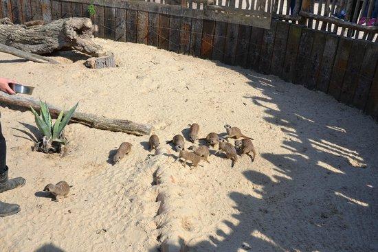 Hobbledown: Маленький зоопарк