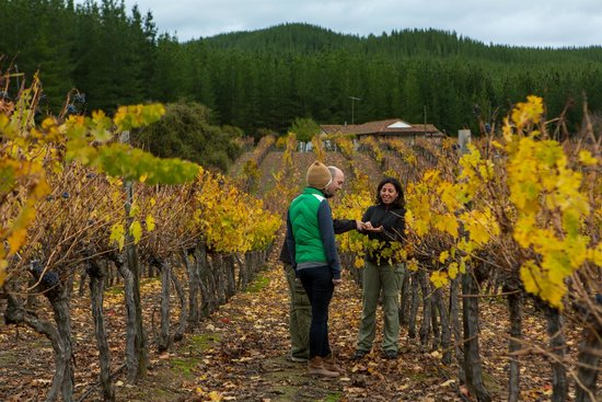 Upscape : Wine tasting in the Maule Valley