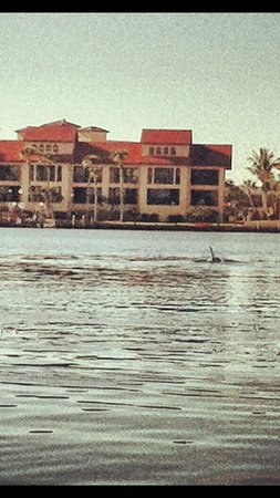 Sunburst Condominiums: Dolphin sighting in lemon bay