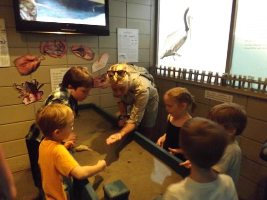 Tybee Island Marine Science Center: The touch table was a huge hit with all the kids