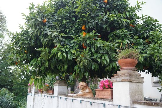 Maggiano, إيطاليا: Дружелюбный пес