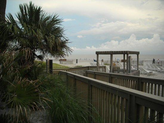 The Top 10 Things To Do Near Coligny Beach Tripadvisor
