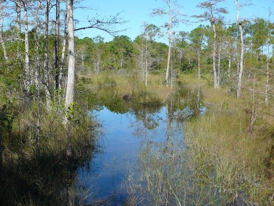 Captain Steve's Swamp Buggy Adventures: Beauty