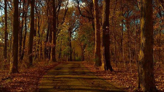 Pilcher Park