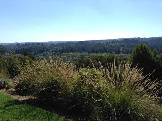 Gary Farrell Winery: View from the patio