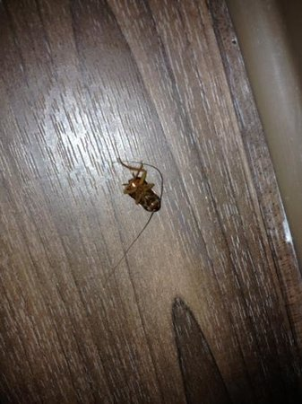 Extended Stay America - Mobile - Spring Hill : Roach in bathroom
