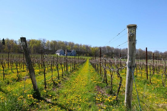 Arrowhead Spring Vineyards
