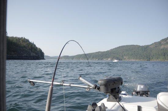 Heron's Landing Hotel: Salmon Fishing