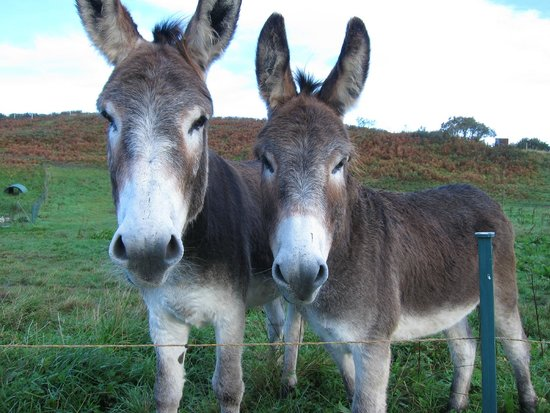 Skye Shepherd Huts: George and Gilbert, the resident donkeys