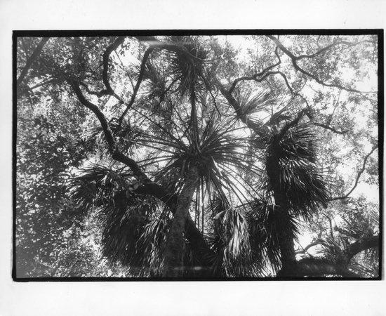 Enchanted Forest Elaine Gordon Park Palm Canopy & Palm Canopy - Picture of Enchanted Forest Elaine Gordon Park ...