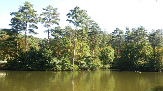 Tirol no Mori: 白鳥型のボートにも乗れる池