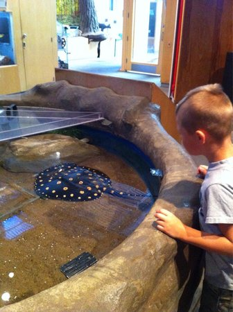 Great Lakes Aquarium : Sting Ray