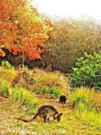 Ku-ring-gai Chase National Park: Meditative Scenery