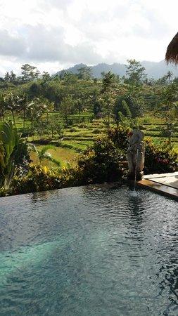 Surya Shanti Villa : piscine Agung