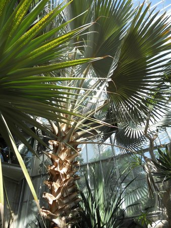 Cleveland Botanical Garden: Plants and trees
