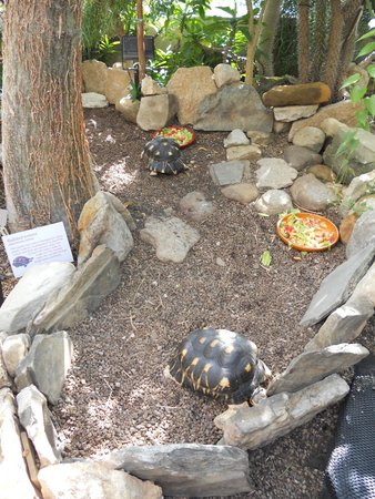 Cleveland Botanical Garden: Turtles
