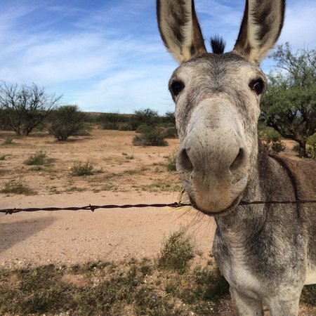 Benson KOA : Daddy donkey. Loves to eat apples and get some 'loves'.