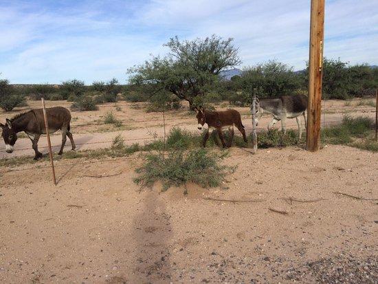 Benson KOA : Great family fun!  Even the donkeys think so!