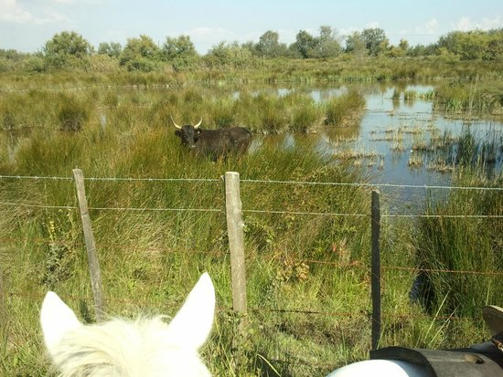 Promenade à cheval, Chez Elise : 1