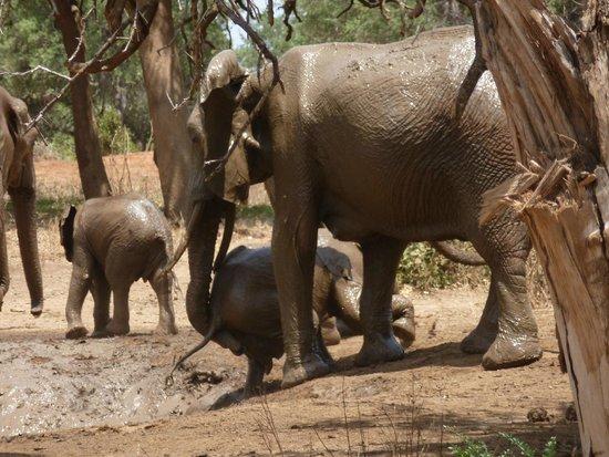 Ndololo Camp: Mamma che aiuta il cucciolo ad uscire