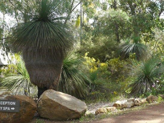 Empire Spa Retreat : Entrance Grass Tree