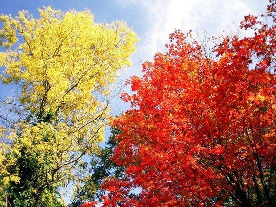 Autumn colours in Cobtree Manor Park