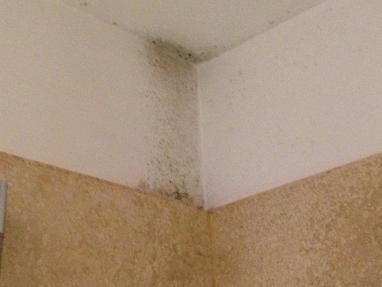 Hotel San Pancrazio: mold