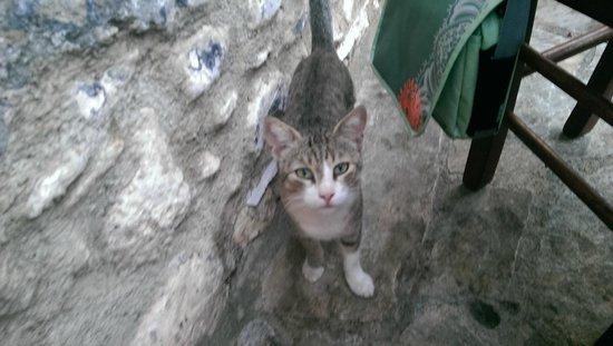 Mystras Inn Cat